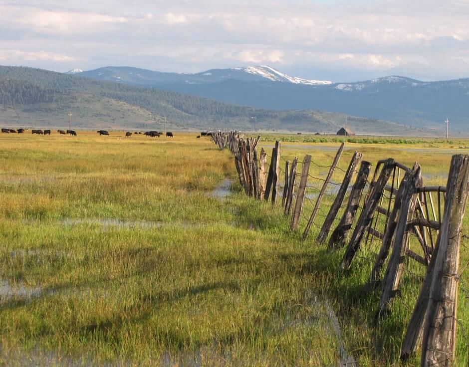 Beautiful View of Sierra Valley and Fencing